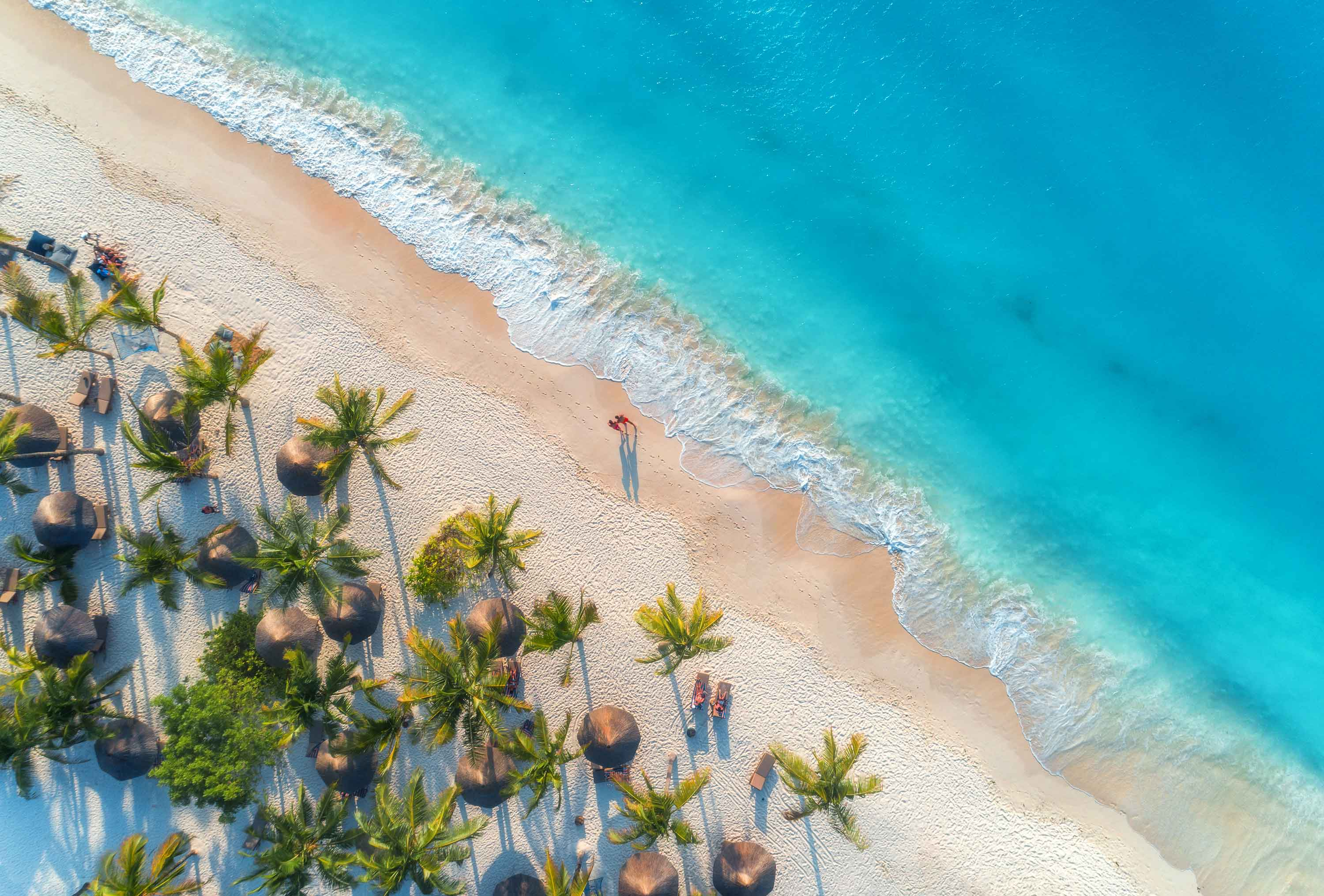 aerial-view-of-umbrellas-palms-on-the-sandy-beach--JZTC7AQ