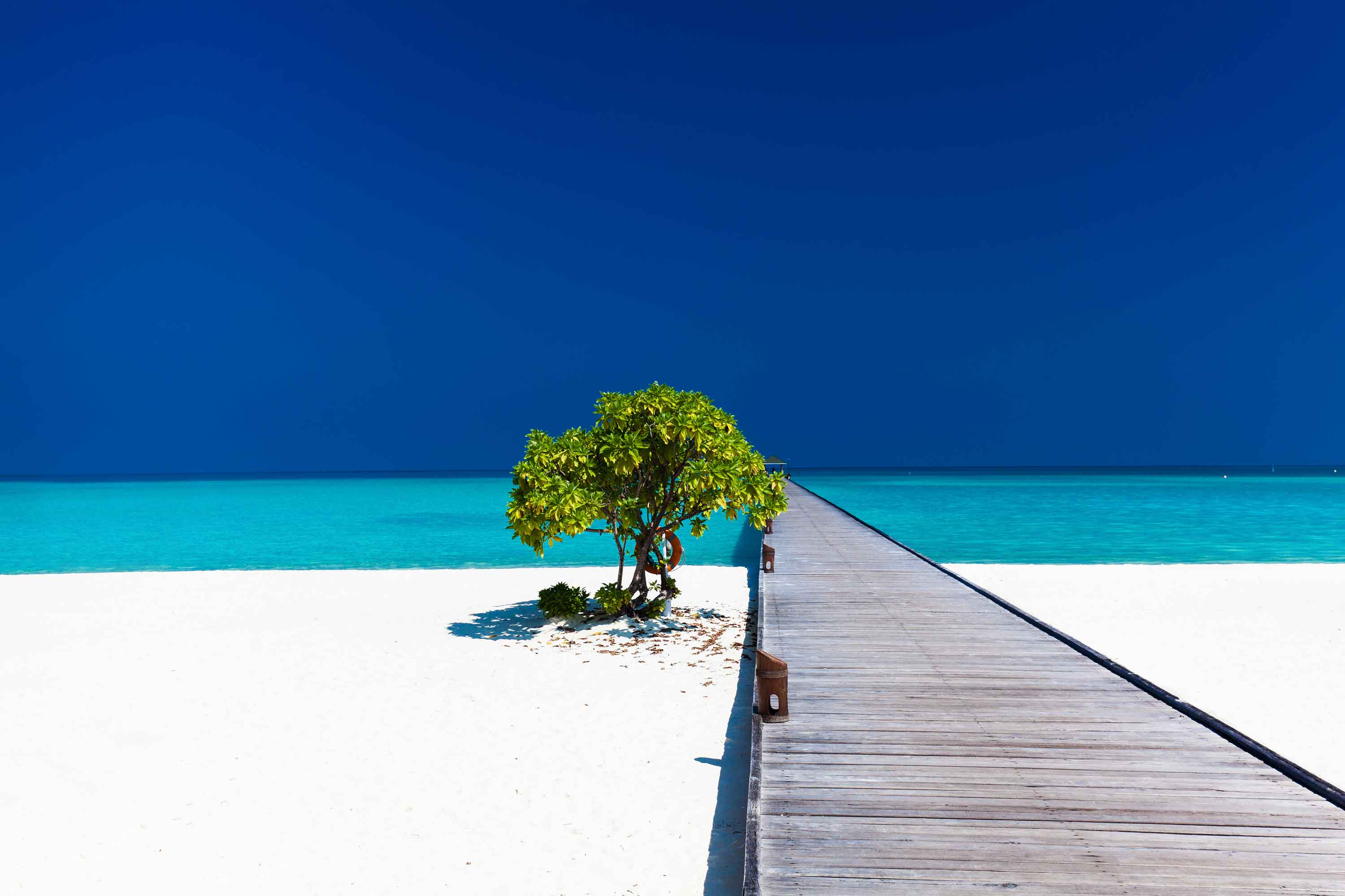 beautiful-beach-with-wodden-jetty-and-single-tree--P4R8WXR